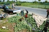 Agricultores asiáticos, sandía vietnamita, de campo, agricultura — Foto de Stock