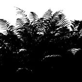 Silhouette of fern — Vector de stock