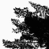 Silhouette of Pine Tree — Stock Vector