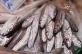 Heap of frozen horse mackerels for sale at a market, La Boqueria Market, Barcelona, Catalonia, Spain — Stock Photo