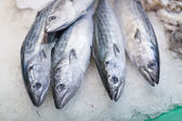 Frozen mackerels for sale at a market — Stock Photo