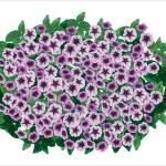 Petunia ornamental flowerpot. — Stock Vector #52550735