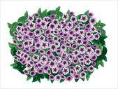 Petunia ornamental flowerpot. — Stock Vector