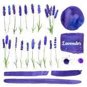 Vector watercolor elements set with lavender. — Stock Vector