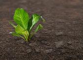 Plant on ground — Stock Photo
