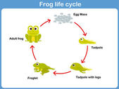 Vector Life cycle of a frog for kids — Stock Vector