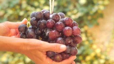 Hand and bunch of grapes under flowing water slow motion — Vídeo Stock