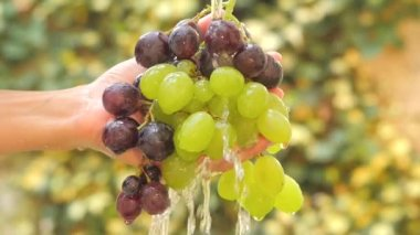 Hand and bunch of grapes under flowing water slow motion — Vídeo de stock