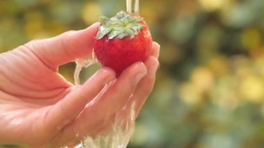 Strawberry in hand under flowing water slow motion — Vídeo de stock
