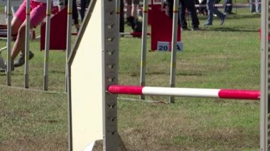 Dog agility, weave poles — Stock Video
