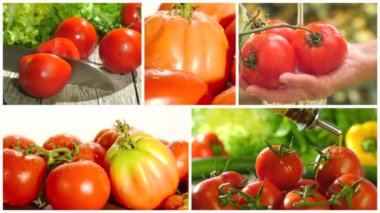 Fresh tomatoes collage — Stock Video