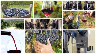 Winemaking montage — Stock Video