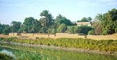 Egypt. Oasis next to Nile river — Photo