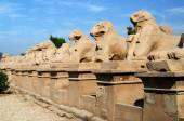 Avenue of sphinxes in Precinct of Amun-Re  (Karnak Temple Complex, Luxor, Egypt) — Stock Photo