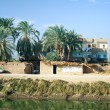 Постер, плакат: Egypt Oasis next to Nile river