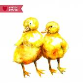 Watercolor couple of ducklings — Stock Vector