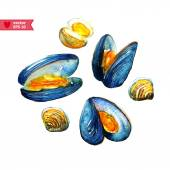 Watercolor mussels on white — Stock Vector