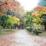 Namiseom island in autumn — Stock Photo #60292097