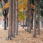 Namiseom island in autumn — Stock Photo #60293565