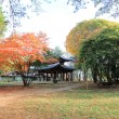 Namiseom island in autumn — Stock Photo #60296107