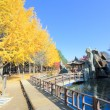 Namiseom island in autumn — Stock Photo #60296815