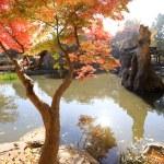 Namiseom island in autumn — Stock Photo #60297185