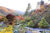 The Garden of Morning Calm — Stock Photo