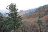 Seoraksan National Park — Stockfoto