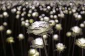 LED flower garden — Foto de Stock