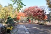 Namiseom island in autumn — Stock Photo