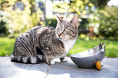 Tabby cat on a paved walkway — Stock Photo