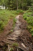 Wooden trail in forest — Stock Photo