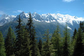 Trees, peaks and Mont Blanc nearby Chamonix in Alps in France — Stock Photo