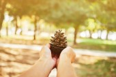 Female hand with  fir-cone — ストック写真