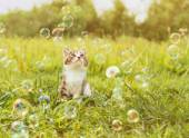 Cute kitten looking at soap bubbles — Stock Photo