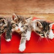 Cute kittens in red box — Stock Photo #60810417