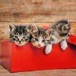 Cute kittens in red box — Stock Photo #60810435