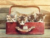 Little kittens in vintage suitcase — Stock Photo