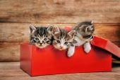 Cute kittens in red box — Stock Photo