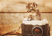 Cute kitten with old camera — Stock Photo