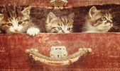 Kittens in vintage suitcase — Stock Photo