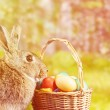 Easter rabbit with colorful eggs — Stock Photo #70047687