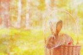 Brown Easter rabbit in basket — Stock Photo