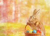 Easter rabbit holds basket with eggs — Stock Photo