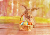 Easter rabbit sits with basket — 图库照片