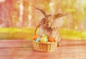 Easter rabbit sits with basket — Stock fotografie