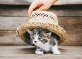 Tabby Kätzchen unter Hut — Stockfoto