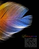 Toning Rainbow feather — Stock Photo