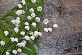 Lilies of the valley and fern leaf — Stockfoto