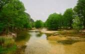Cypress le fleuve Frio — Photo